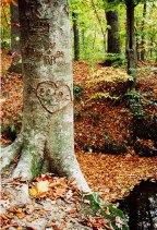carved-tree.jpg